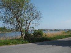 Asphalt, Gras, Baum, Meer, Herrlich