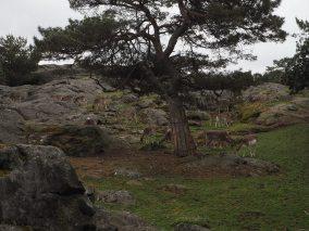 Slottskogen's Tierpark